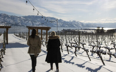 Winter Hours for Winter Wineries